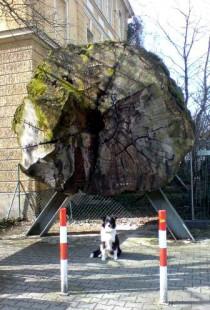 Mammut-Baumstamm mit Hund